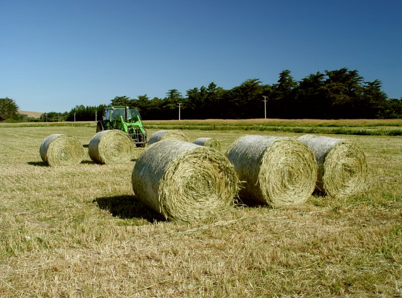 stacked hay in a field