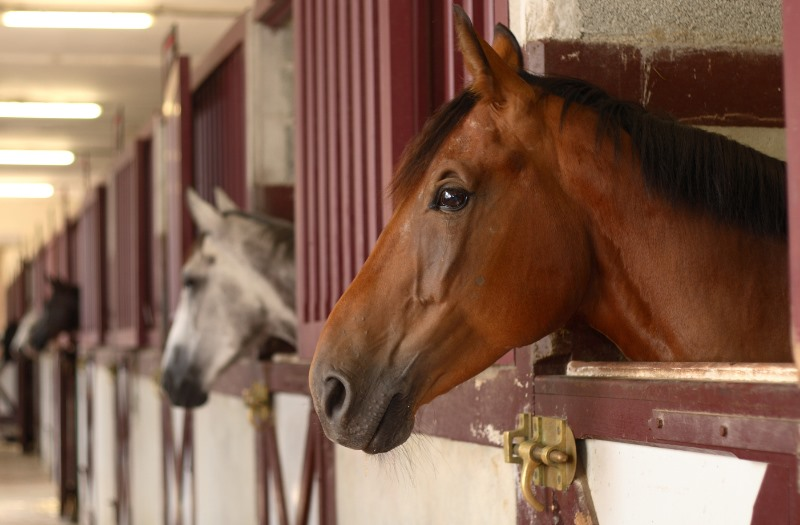 horses costs for stables