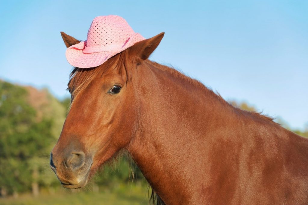 Horse with pink cowboy hat